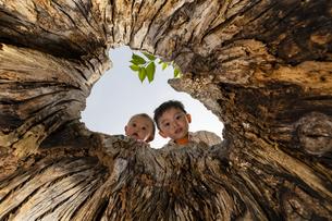 木の穴をのぞく子供の写真素材 [FYI04860402]