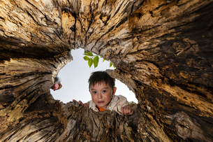 木の穴をのぞく子供の写真素材 [FYI04860404]