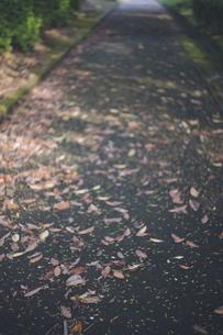 落ち葉の小径 - 鹿児島県の桜島自然恐竜公園の写真素材 [FYI04860973]