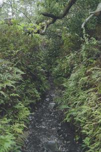 鹿児島県の日本100名山、開聞岳の山道の写真素材 [FYI04860985]