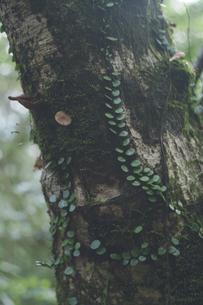 鹿児島県の日本100名山、開聞岳の山道で見つけた植物の写真素材 [FYI04860996]