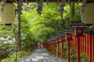 新緑の貴船神社参道の写真素材 [FYI04861376]