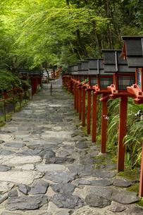 新緑の貴船神社参道の写真素材 [FYI04861377]