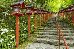 新緑の貴船神社参道の写真素材 [FYI04861378]