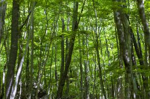 新緑の森林の中の写真素材 [FYI04861476]