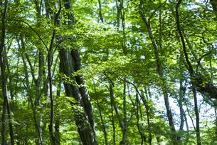 新緑の森林の中の写真素材 [FYI04861477]