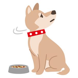 食欲不振の犬のイラスト素材 [FYI04861497]