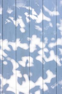 白い板塀に映る影の写真素材 [FYI04861549]