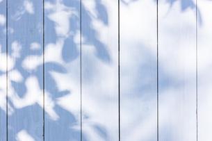白い板塀に映る影の写真素材 [FYI04861550]