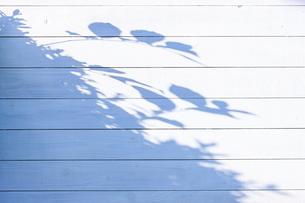 白い板塀に映る影の写真素材 [FYI04861552]