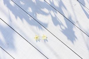 白い板塀に映る影の写真素材 [FYI04861555]