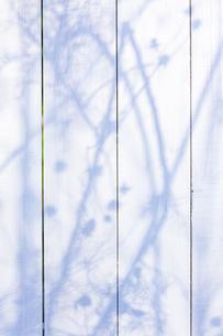 白い板塀に映る影の写真素材 [FYI04861557]