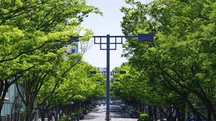 表参道、新緑の欅並木(ケヤキ並木)の写真素材 [FYI04861690]