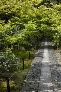 鹿王院 新緑の参道の写真素材 [FYI04861885]
