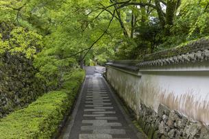 善峯寺 新緑の参道の写真素材 [FYI04861895]