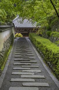 善峯寺 新緑の参道の写真素材 [FYI04861896]
