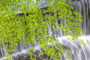 貴船川と新緑の写真素材 [FYI04861912]