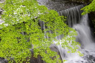 貴船川と新緑の写真素材 [FYI04861913]