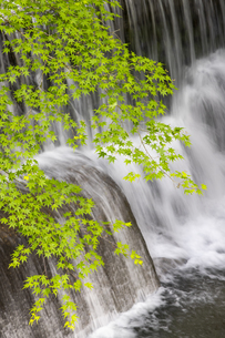 貴船川と新緑の写真素材 [FYI04861915]