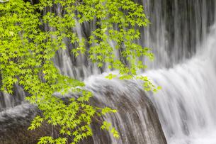 貴船川と新緑の写真素材 [FYI04861916]
