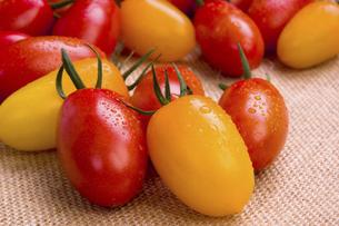 ミニトマト 品種はアイコの写真素材 [FYI04861995]