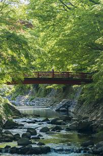 修善寺温泉 桂橋から新緑の中に映える楓橋を臨むの写真素材 [FYI04862017]