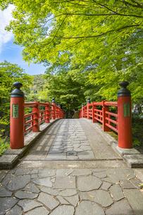 修善寺温泉 春の新緑に映える楓橋(南側から北側への風景)の写真素材 [FYI04862026]