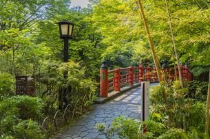 修善寺温泉 春の新緑に映える楓橋(南側から北側への風景)の写真素材 [FYI04862031]