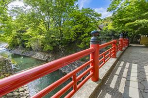 修善寺温泉 春の新緑に映える楓橋(南側から北側への風景)の写真素材 [FYI04862040]