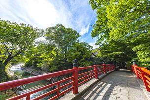 修善寺温泉 春の新緑に映える楓橋(南側から北側への風景)の写真素材 [FYI04862041]