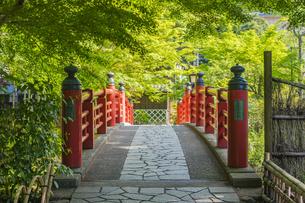 修善寺温泉 春の新緑に映える楓橋(北側から南側への風景)の写真素材 [FYI04862045]