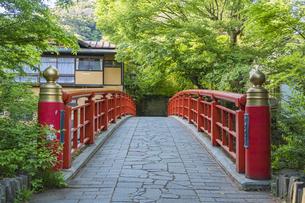 修善寺温泉 春の新緑に映える桂橋(南側から北側への風景)の写真素材 [FYI04862053]