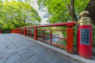 修善寺温泉 春の新緑に映える桂橋(南側から北側への風景)の写真素材 [FYI04862057]