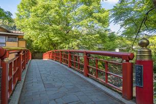修善寺温泉 春の新緑に映える桂橋(南側から北側への風景)の写真素材 [FYI04862062]