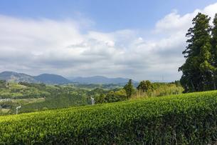 旧東海道の三大難所「小夜の中山」の茶畑の写真素材 [FYI04862812]