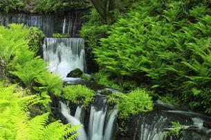 白糸の滝と新緑 長野県軽井沢町の写真素材 [FYI04862834]