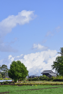 畑の中の緑の木々と民家の青空の上空に浮かぶ雲の光景の写真素材 [FYI04862935]