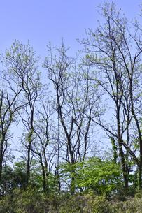 新緑の芽吹きが進む多くの木々の光景の写真素材 [FYI04862937]