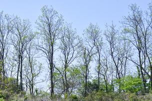 新緑の芽吹きが進む多くの木々の光景の写真素材 [FYI04862939]