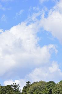 新緑の木々の上空に浮かぶ雲の写真素材 [FYI04862948]