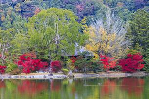 福島県 白水阿弥陀堂の写真素材 [FYI04863118]