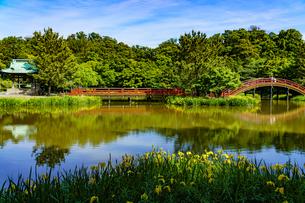 青空と称名寺の黄菖蒲の風景の写真素材 [FYI04863219]