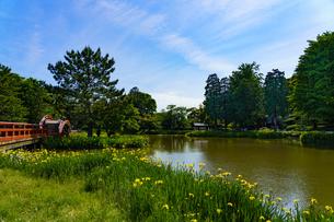 青空と称名寺の黄菖蒲の風景の写真素材 [FYI04863246]