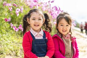 コスモス畑の女の子の写真素材 [FYI04863261]