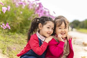 コスモス畑の女の子の写真素材 [FYI04863263]