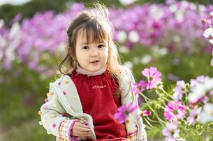 コスモス畑の女の子の写真素材 [FYI04863281]
