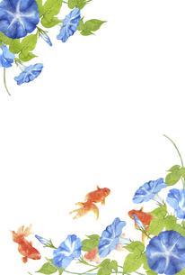金魚と朝顔の水彩画 はがきサイズのイラスト素材 [FYI04863310]