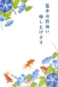 金魚と朝顔の暑中お見舞いのイラスト素材 [FYI04863311]