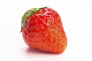 朝摘みイチゴの写真素材 [FYI04863647]
