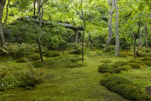 新緑の祇王寺の写真素材 [FYI04863694]